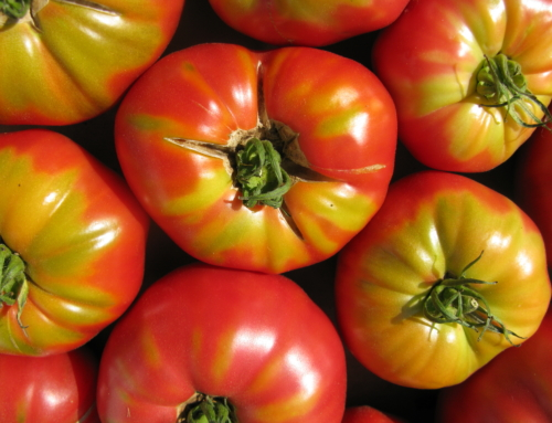 MOROCCO AND THE NETHERLANDS EXPORTATIONS CORNERED THE SPANISH TOMATO